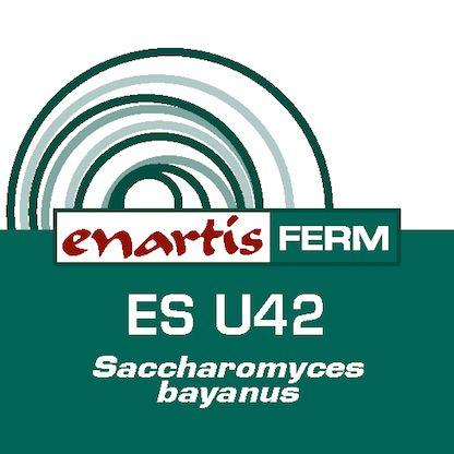EnartisFerm ES U42