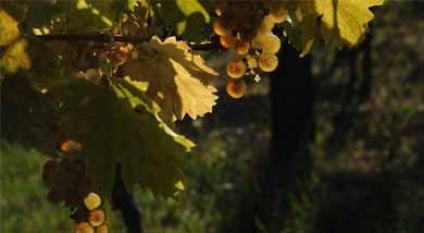 A Vindependent vezetői a borágazat kihívásairól