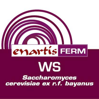 EnartisFerm WS
