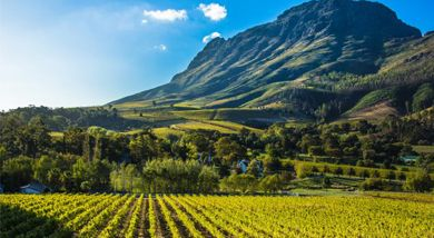 Chinese demand for South African wine continues to rise