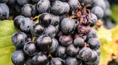 La facturación de vino español exportado aumenta un 3,5% con un precio medio de 1,47 euros el litro
