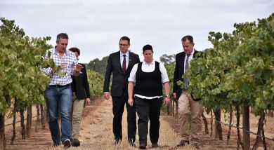 Research in South Australia to clear the air on smoke taint in wine