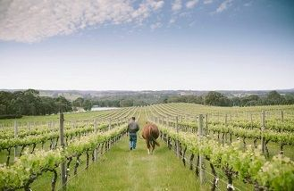 Australian wine industry finally united on leaving the world a better place