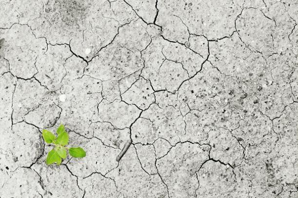 La viticultura frente al cambio climático