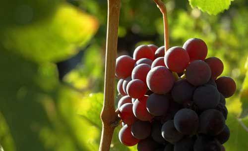 6 Mercados interesantes y sus tendencias en exportaciones e importaciones de vino