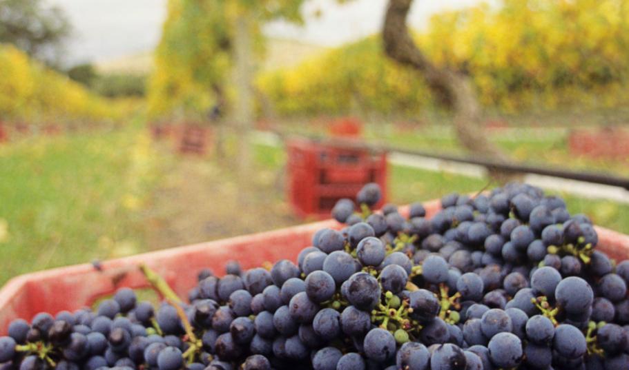 ACCC interim report – Wine grape market study