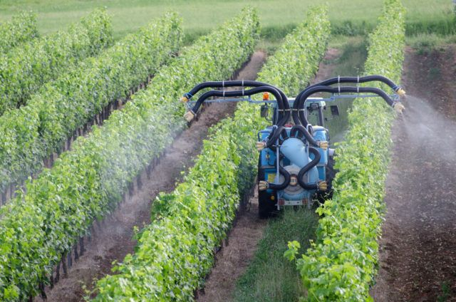 Climate change resulting in the use of more pesticides in vineyards