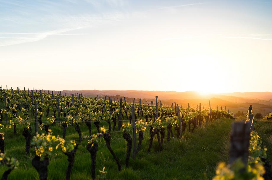 How do winemakers combat heatwaves? Ask Decanter