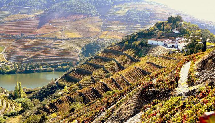 Duas quintas do Douro entre os 50 melhores enoturismos