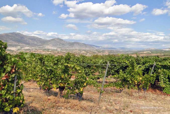 Four Wineries of Macedonia and Eastern Macedonia/Thrace