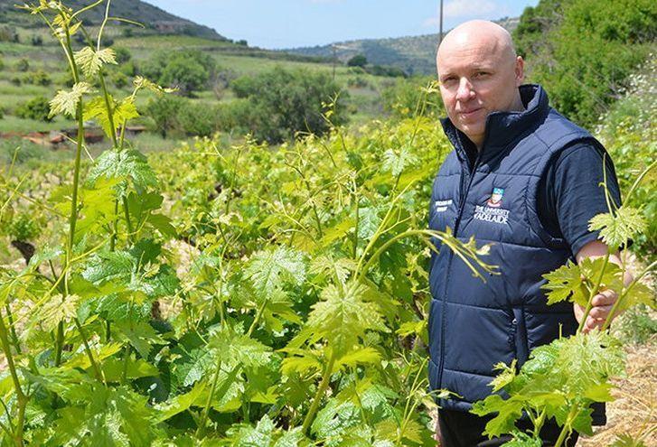 Szárazságtűrő szőlőkkel a klímaváltozás ellen