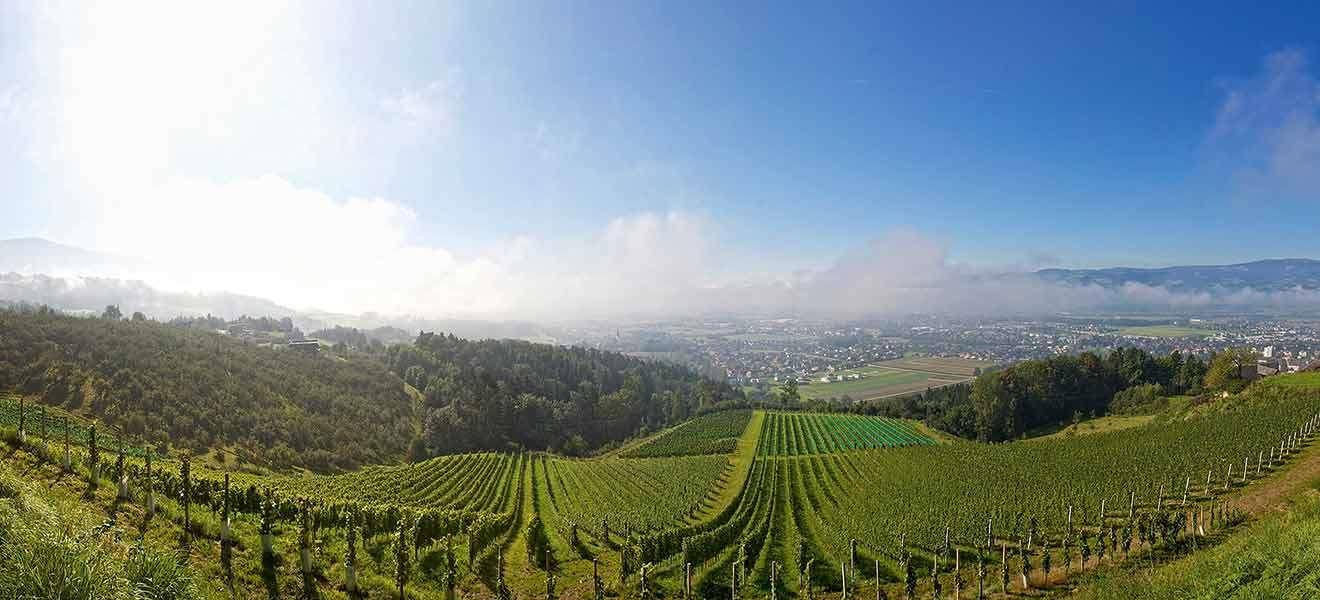 Wein aus Kärnten im Kommen