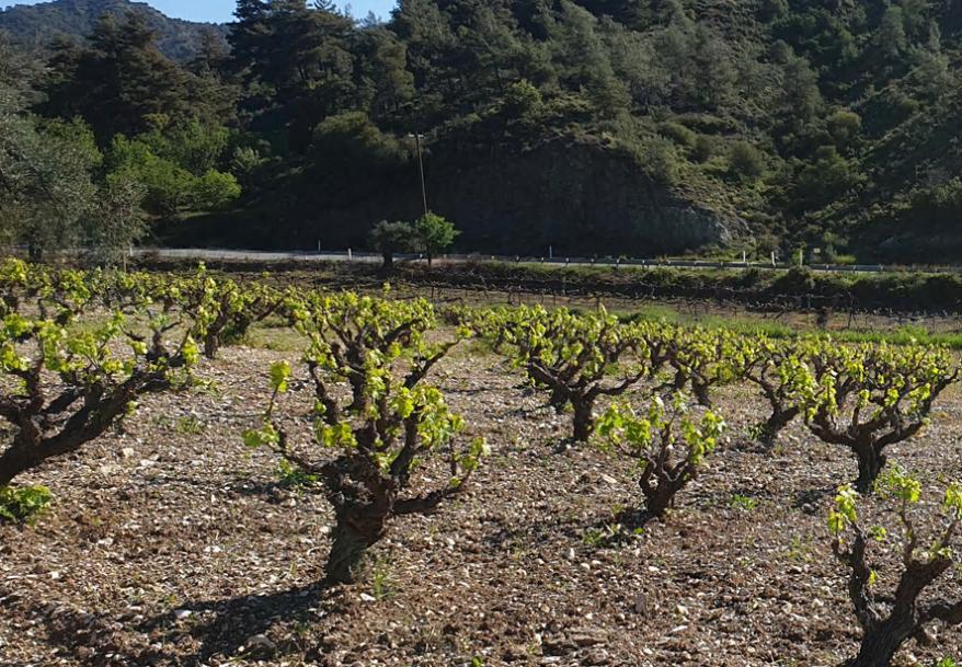 Winetalk: wine of kings, kings of wines