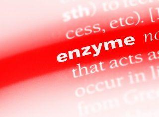 Pectin-lyase – the key wine enzyme?