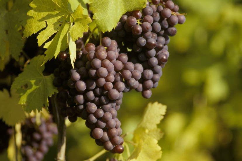 Österreichische Weine sind wieder angesagt: Ein Blaufränkisch-Trio der Sonderklasse