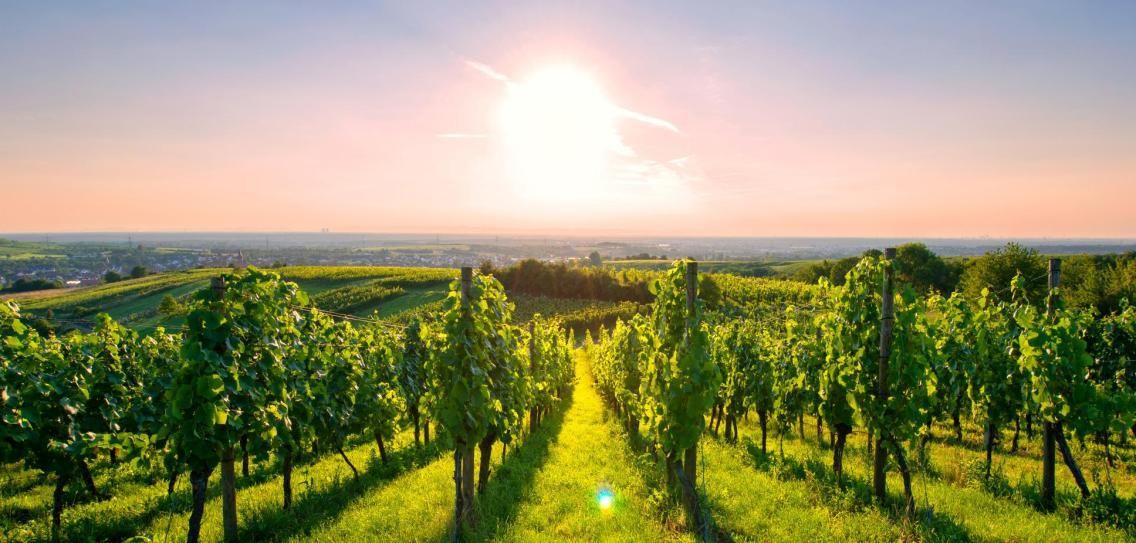 Deutscher Wein wird künftig besser