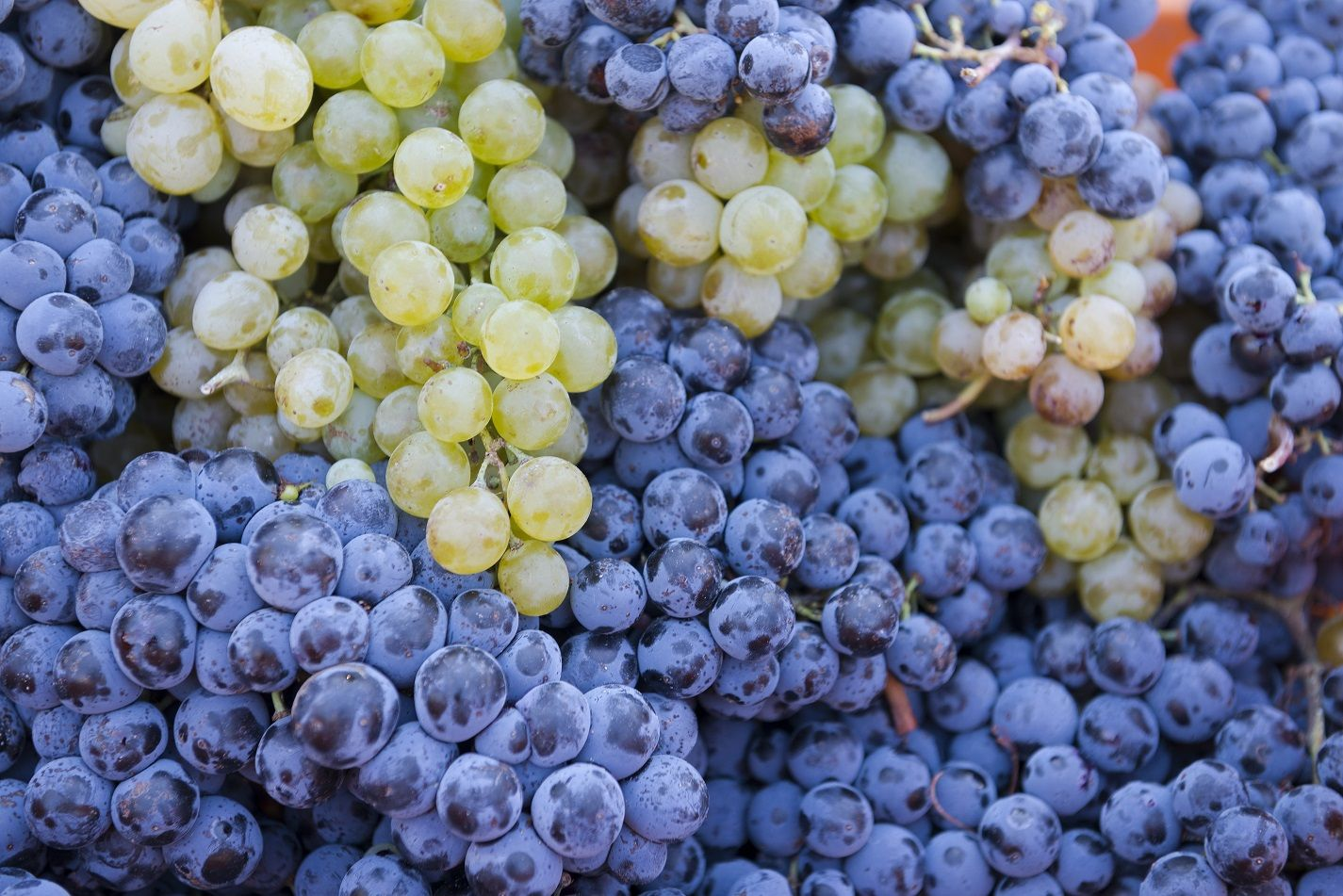 Enhancing tropical fruit avour in Chardonnay and Shiraz through foliar nutrient sprays
