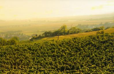 Halbjahresbilanz: Weinexporte Trotzen Corona