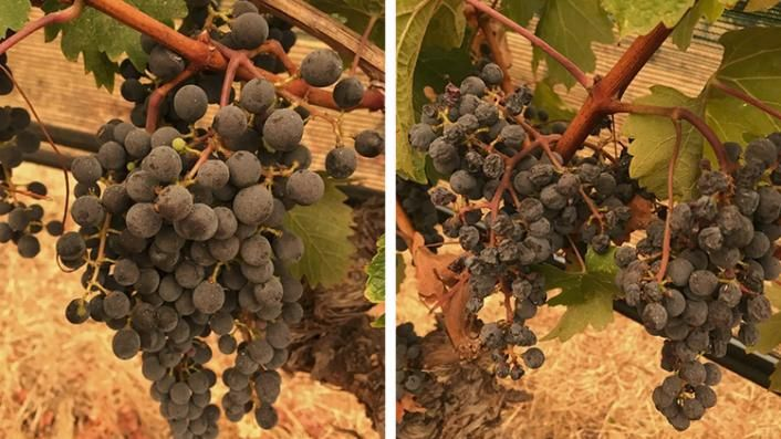 A Miracle in the Vineyard (Paywall)