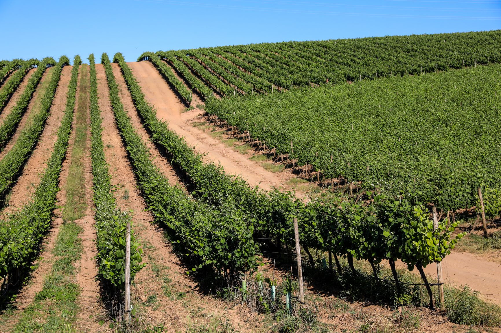 Vinho: Portugal exportou mais e a um preço mais alto