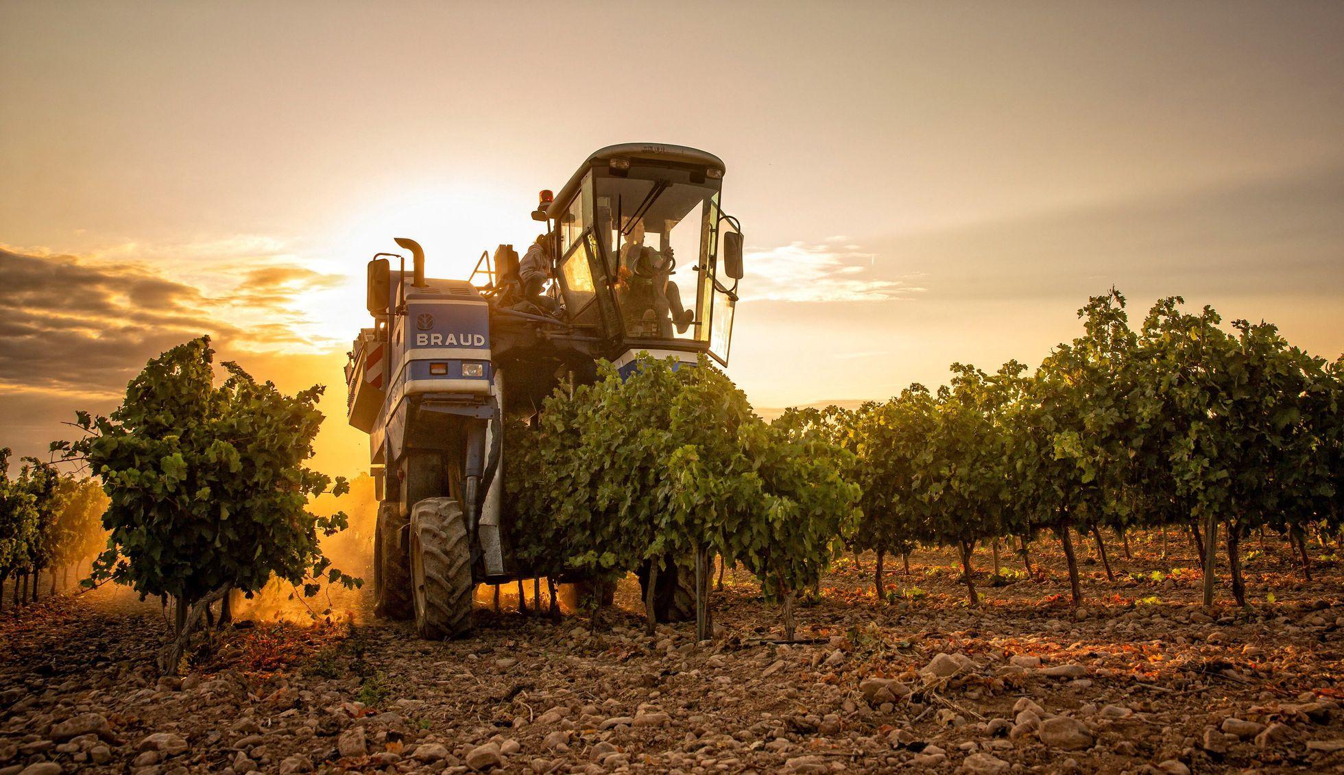 Arranca una vendimia con precios más altos por el aumento de la demanda y el recorte de la cosecha